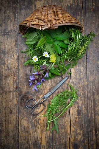 A basket of various wild herbs and edible flowers (seen from above)