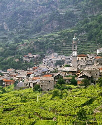Nebbiolo-Weinberg bei Carema im Norden des Piemont, Italien