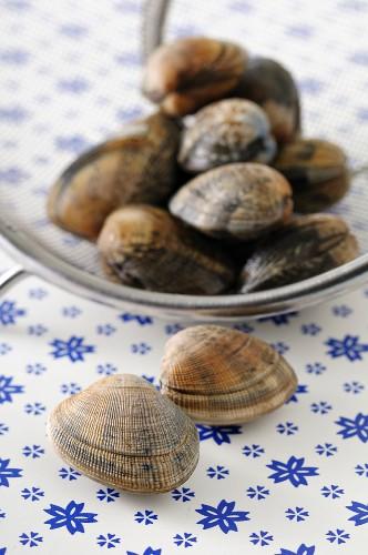 Venusmuscheln auf Teller und daneben