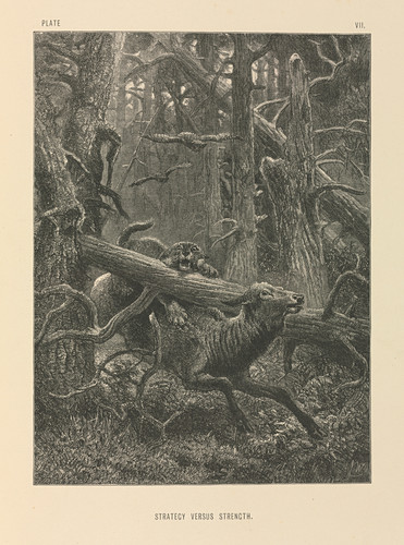 Deer and forest cat,19th century