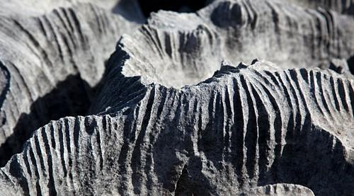 Limestone pavement,New Zealand