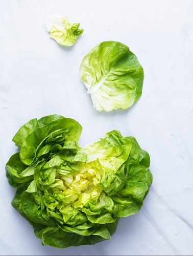 Head of lettuce with pulled off leaves