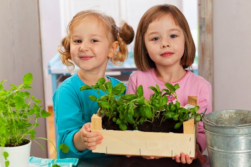 Two girls showing a crate of basil