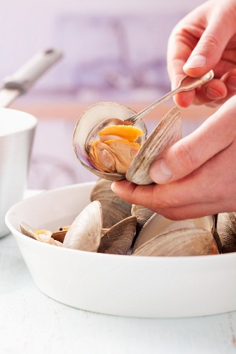 Removing cooked clam meat from shells