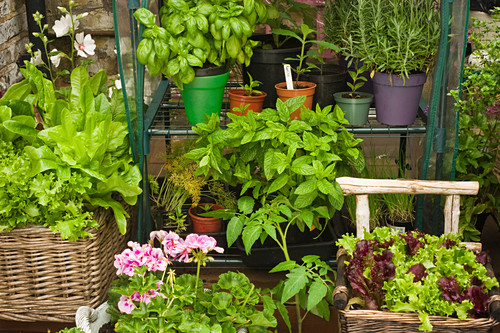 Various herbs, lettuce and flowers in pots in a garden