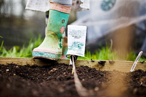 A hotbed with a seed package as a label and a child's Wellington boot