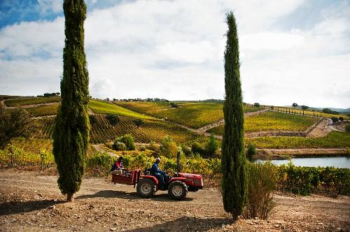 Vineyards in the Brancaia winery in Maremma (Tuscany)