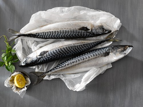 Three Whole Fresh Atlantic Mackerel on White Paper; Lemon and Herbs
