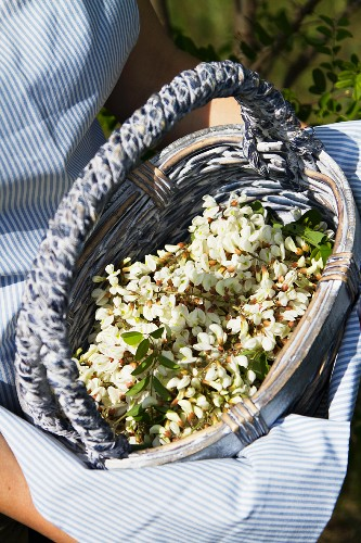 A woman holding a basket of acacia flowers