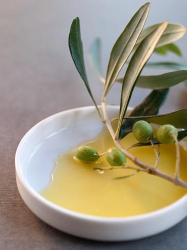 Olivenzweig in Olivenöl