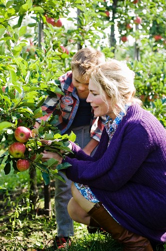 A mother and son picking apples