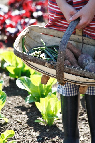 A hand holding a wood-chip basket containing freshly harvested vegetables, in the garden