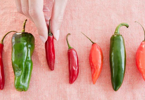 USA, New Jersey, Jersey City, Close-up view of woman's hand with chili peppers