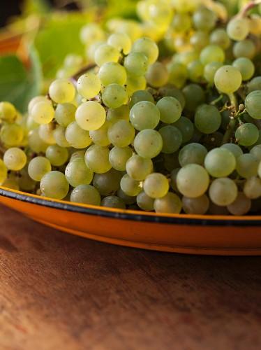 Platter of Grapes