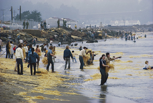 Oil Spill Cleanup,San Francisco,USA