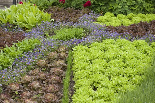 Decorative patterns in the vegetable garden planted with salads