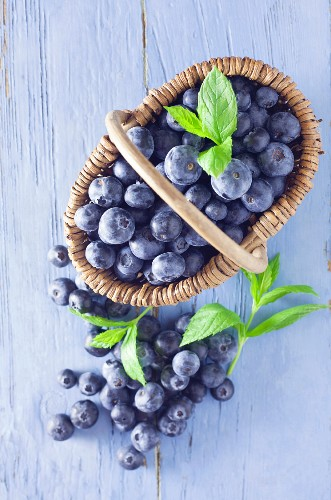 Blueberries in a basket on a blue wooden background