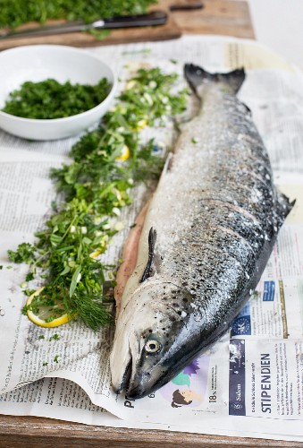 Fresh salmon with lemon and herbs on newspaper