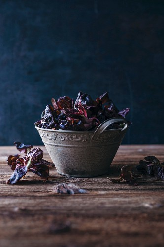 Red raddichio in a vintage bucket