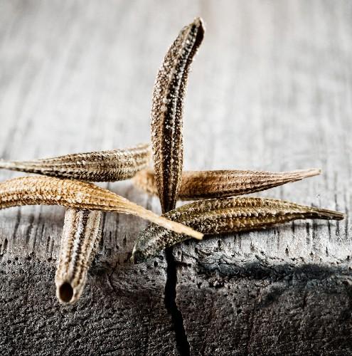 Seeds from salsify (Tragopogon porrifolius)