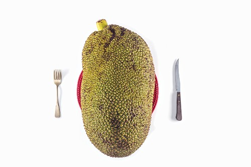 A large jack fruit on a plate with cutlery against a white background (top view)