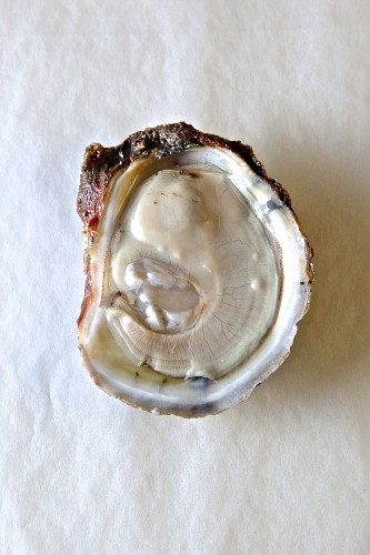 Open bluepoint oyster against white background (supervision)