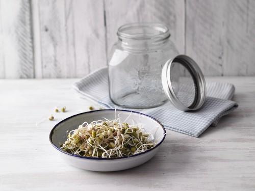 Homegrown mung bean sprouts