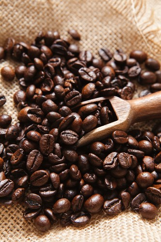 Coffee beans with a mini wooden scoop on a hessian sack