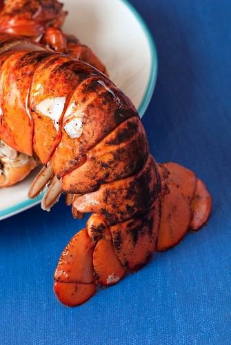 Close up of lobster tail