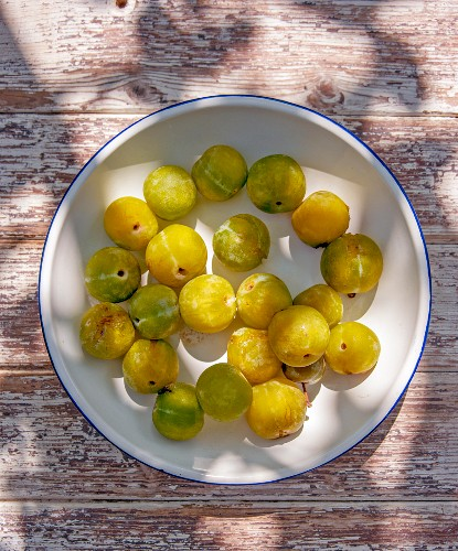 Greengage plums on a plate (top view)