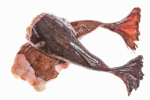 Two fresh monkfish