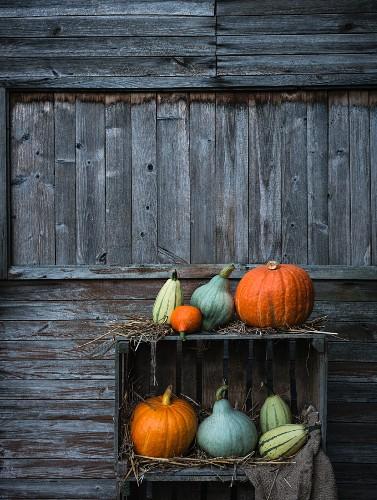 Various types of pumpkin arranged on a wooden box