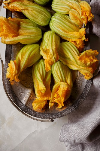 Zucchini blossoms, an edible part of the plant
