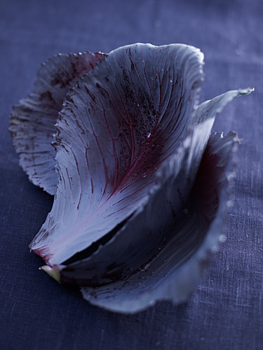 Red cabbage leaves on a dark background