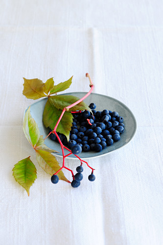 Wild wine berries (Parthenosissus Tricuspidata)