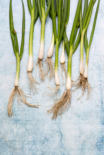Fresh spring onions with roots