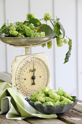 Fresh hops on a set of scales