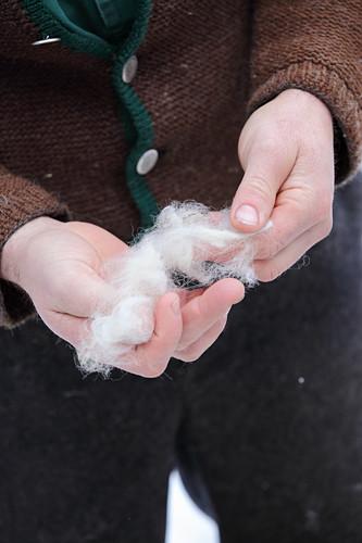 Hände halten saubere Wollfasern