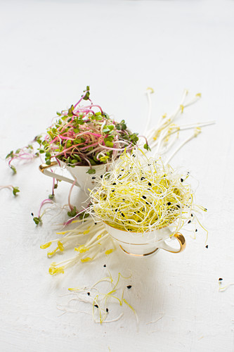Fresh germlings in vintage cups: leek, red radish and peas