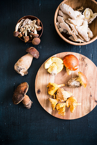 An arrangement of mushrooms with chanterelles and porcini mushrooms