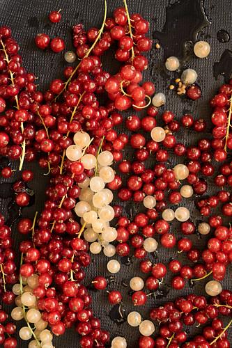 Rote und weiße Johannisbeeren