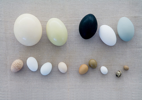 Various eggs on grey fabric