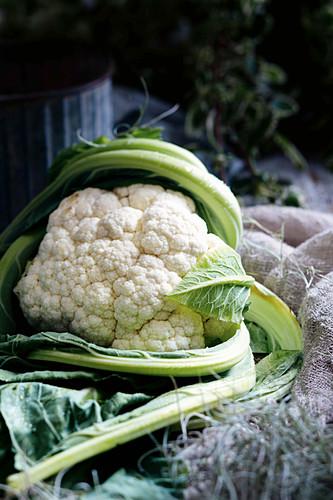A cauliflower head
