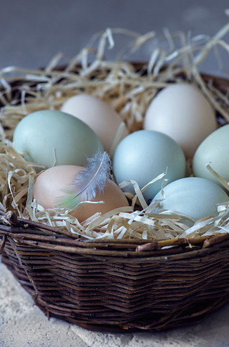 Pastel coloured eggs in a nest