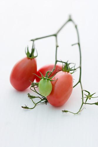 'Freiburg San Marzan' (tomato variety)