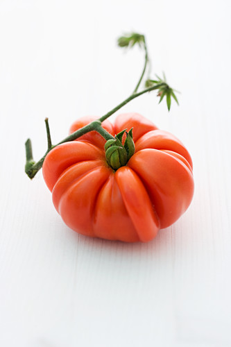 'Hopi' (tomato variety)