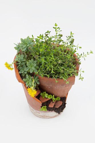 A decorative mini patio garden