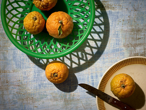 Bitter oranges in and around a plastic basket