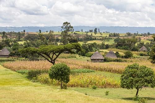 Rural Ethiopian landscape