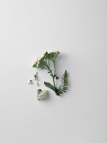 Yarrow, flowers and herbs